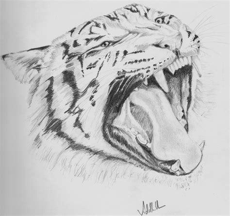 animal pencil sketch light  shade