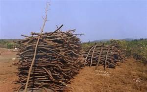 Hutan Mangrove Di Meranti Hancur