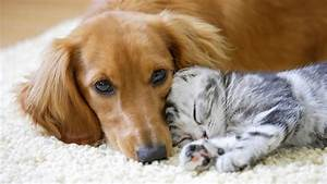Dogs Versus Cats  Scientists Reveal Which One Is Smarter