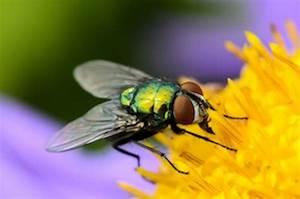 Fliegenplage Im Haus : fliegenplage in der k che tiere frage und antwort wochenblatt f r landwirtschaft landleben ~ Eleganceandgraceweddings.com Haus und Dekorationen