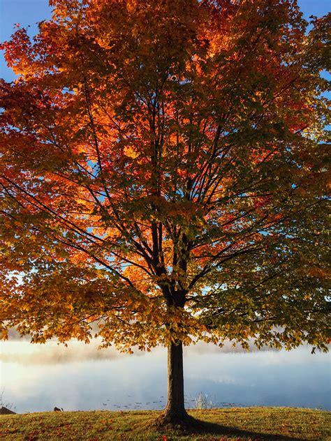gratis billeder landskab trae skov afdeling sollys