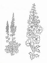 Larkspur Flower Coloring Pages Tattoo Flowers Drawing July Delphinium Drawings Birth Tattoos Month Printable Larkspurs Sketch Delphiniums Template Designlooter Print sketch template