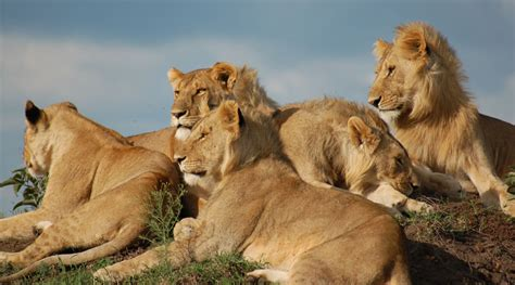 List: 20 Must See African Animals When on a Safari