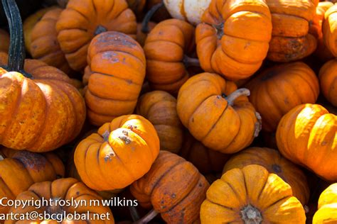 Colorado Pumpkin Patches 2017 by Pumpkin Patch Los Angeles Open Late Todaymodelmy Over