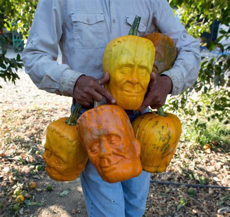 Halloween Faces For Pumpkins Carving pumpkins grown in frankenstein s monster face molds