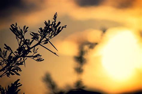 Free Stock Photo Of Backlight Light Nature