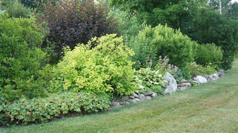 shrubs for borders 1000 images about shrub border with lime on pinterest