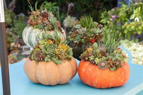 design  serenity  succulent topped pumpkins
