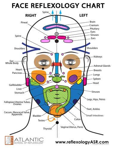 face reflexes chart asr reflexology