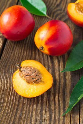 baum stecklinge ziehen nektarinen baum z 252 chten garten garten bepflanzen obstb 228 ume pflanzen und garten