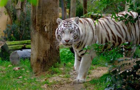 Jardín Zoológico En Lisboa 8 Opiniones Y 79 Fotos