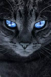 CAT BREEDS   Pinterest   Beautiful, To share and Kitty