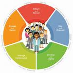 Talent Employee Management Strategies Cycle Positive Lifecycle