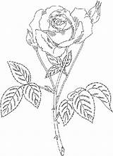 Coloring Rose Roses Flower Flowers Printable Sheets Roses3 Adults sketch template