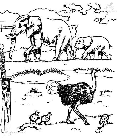 Kleurplaat Olifant Muziek by Kleurplaat Ritme Olifant En Struisvogel Muziekmoment