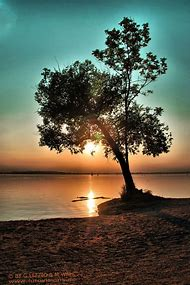 Beautiful Sunset with Tree