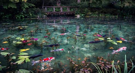 monets pond  reborn  japan  chromologist