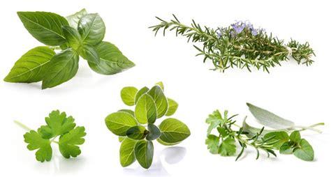 comment cuisiner les seches herbes aromatiques de grandes qualités nutritionnelles