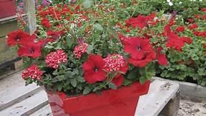 Jardiniere Fleurie Plein Soleil : jardini res plantation des fleurs annuelles mode d ~ Melissatoandfro.com Idées de Décoration