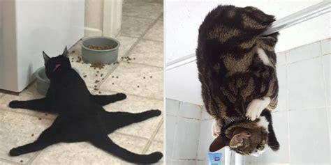 verrueckte katzen denen deine regeln egal sind