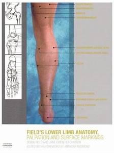Medical Material  Lower Limb Anatomy  Palpation  U0026 Surface