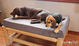 buddyrest memory foam dog bed review and testing 2018 With dog beds for destructive dogs