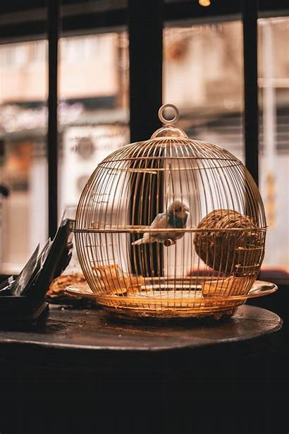 Cage Bird Trapped Unsplash Wallpapers Cages Birds