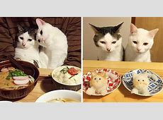 Japanese Couple Captures Every Time Their Cats Watch Them