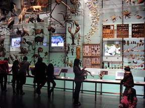 american museum  natural history faces dna problem
