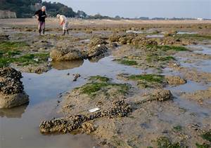 Training Event at Pett Level Submerged Forest, East Sussex ...