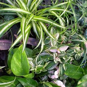Plante D Intérieur : jardins bleus plantes d 39 int rieur ~ Dode.kayakingforconservation.com Idées de Décoration