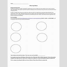 Cells Alive Plant Cell Worksheet Answer Key Briefencounters