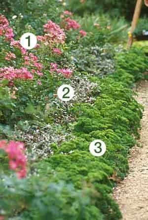sun border plants border plants full sun image search results