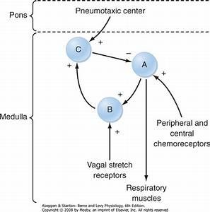 Control Of Respirationv
