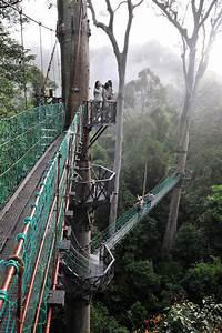 Borneo Rainforest Lodge holiday accommodation in Borneo ...