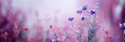 Flower Header Earth Pink Flowers Covers Abyss