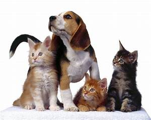animal wallpapers pet and wild animals