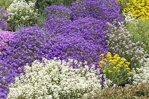 Couvre Sol Vivace : plante vivace rampante liste ooreka ~ Premium-room.com Idées de Décoration