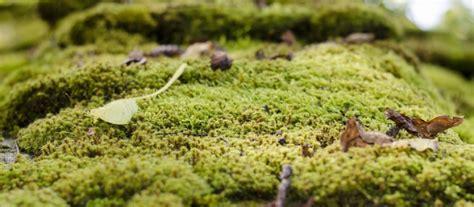 Moss Removal For Your Roof Green Roof Paver Systems Rooftop Garden Restaurant London Red Inn Chicago Lansing Il Metal Installation Instructions Over Shingles Star Roofing Albany Ny Reviews Repair Solutions Houston Superior Lakewood Nj Truss Building Regulations