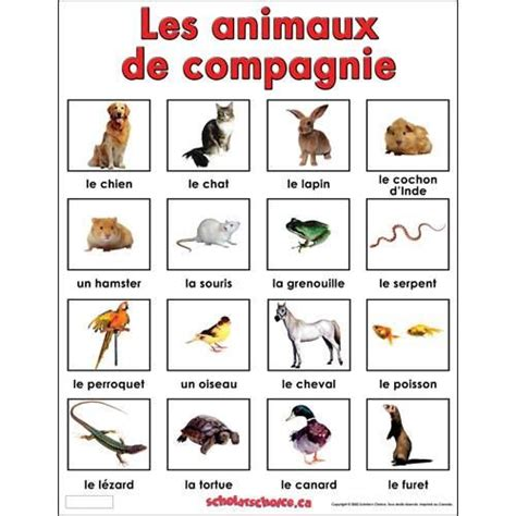 1000 images about fle les animaux domestiques on pets words and chs