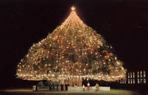 awesome trees 13 largest living xmas tree wilmington nc koshersamurai