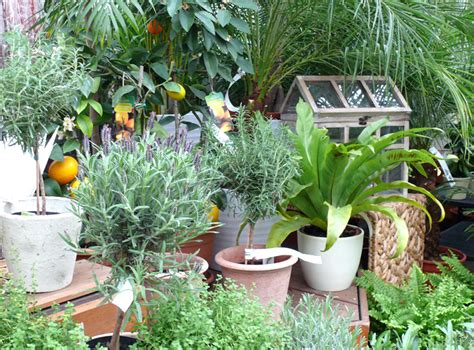 Smartfox 3 X 4er Pack Pflanzen Bewässerungssystem