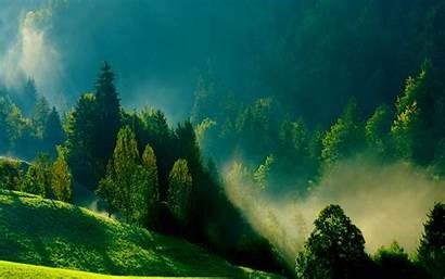 Mist Morning Wallpapers Forest Misty Desktop Nature