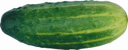Cucumber Transparent Pngimg Purepng Android