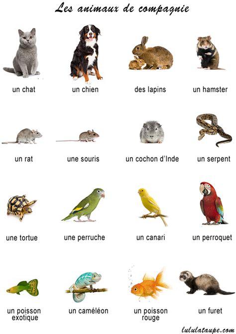 pat les animaux de compagnie imagier les animaux de compagnie lulu la taupe jeux gratuits pour enfants