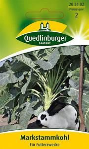Blumenkohl Pflanzen Abstand : kohlsamen markstammkohl futterkohl von quedlinburger saatgut ~ Whattoseeinmadrid.com Haus und Dekorationen