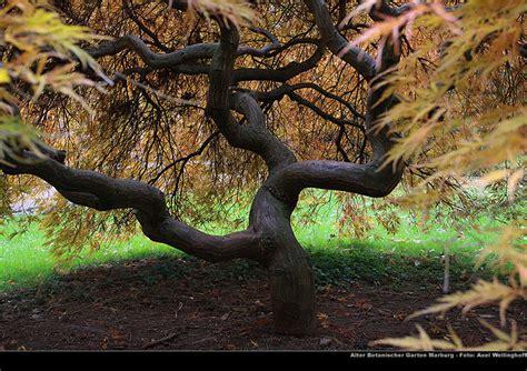 Japanischer Garten Vorher Nachher by Marburg Impressionen De Alter Botanischer Garten Marburg