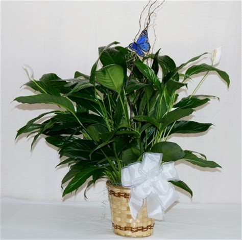 krupp florist your flower shop belleville il