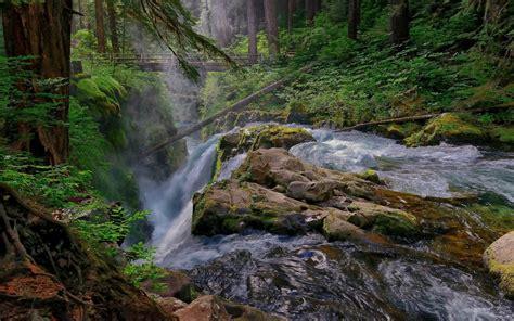 mountain stream waterfall pine trees wooden bridge