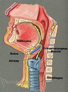 Illustration  Commercial Art  Logo Design  Medical Illustration And Technical Illustration Art